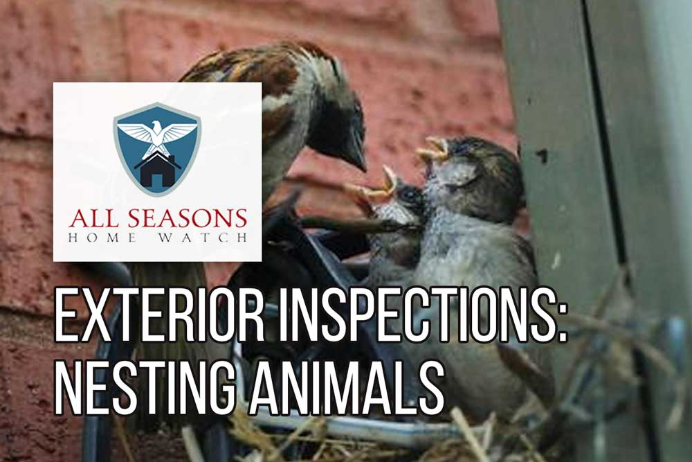 Exterior Property Inspections: Nesting Animals